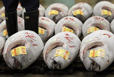 Atunes congelados en una lonja japonesa.