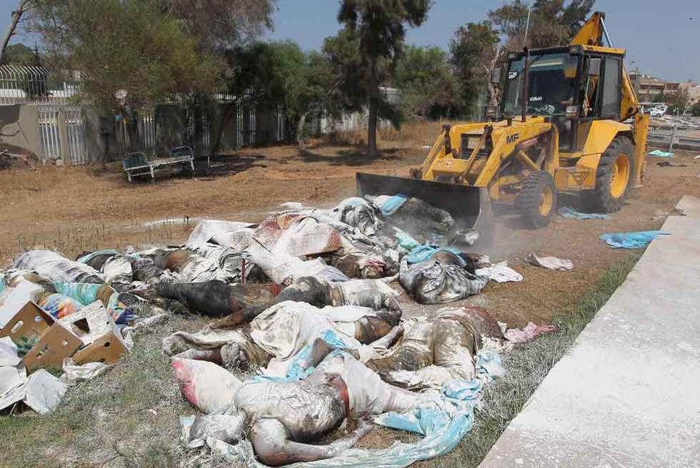 Una excavadora retira cad veres abandonados edici n for Jardines terapeuticos en hospitales