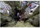 Un escudo para el árbol milenario