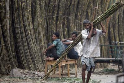 Un hombre porta cañas de azúcar en la localidad india de Kolkata.