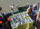 Carné por puntos para la pesca