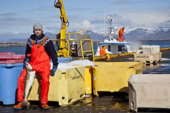 Un pescador sostiene un bacalao en el puerto de Reikiavik. Esta es una de las grandes industrias del país.