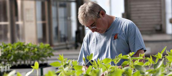 Un investigador de Monsanto en un laboratorio de la empresa en EE UU.
