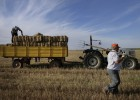 Los precios de los cereales se hunden por las importaciones
