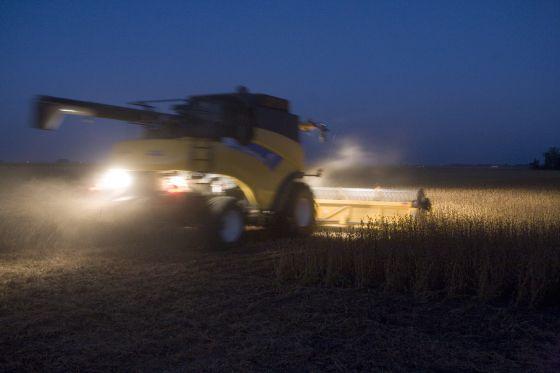 Cultivos de soja en Argentina.