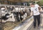 Competencia rechaza las medidas de Agricultura para la leche