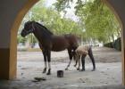 Fin de una crisis de caballo