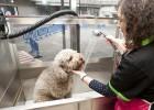 Una guardería de mascotas y un 'spa' para perros en El Corte Inglés