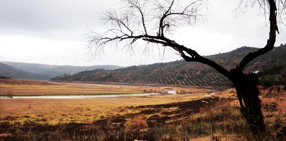 Un campo junto al embalse de Giribaile, en Jaén, cuyas reservas están al 40%