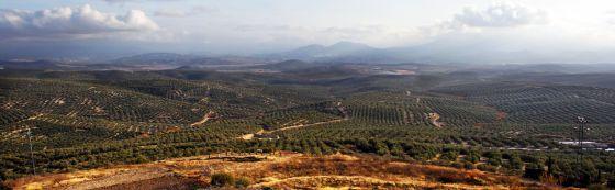 Vista desde Úbeda de los campos de olivos que se extienden hasta la sierra de Cazorla.