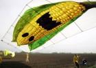 Activistas de Greenpeace durante un acto de protesta contra el cultivo de maíz transgénico de Monsanto.
