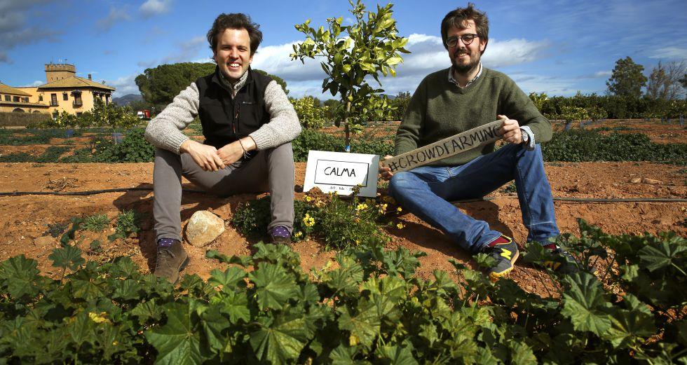 Gonzalo Úrculo (izquierda) y su hermano Gabriel, con los naranjos de su empresa.