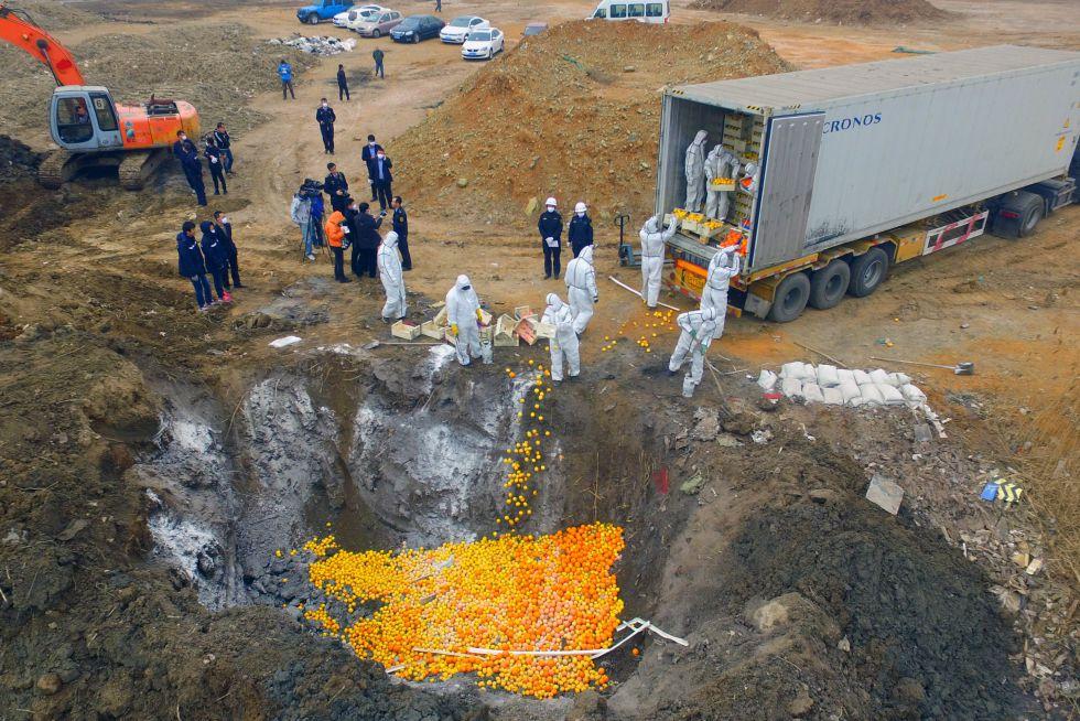 Un grupo de operarios entierra naranjas españolas en Tianjin (China). Las autoridades consideraron que no cumplían las condiciones sanitarias mínimas