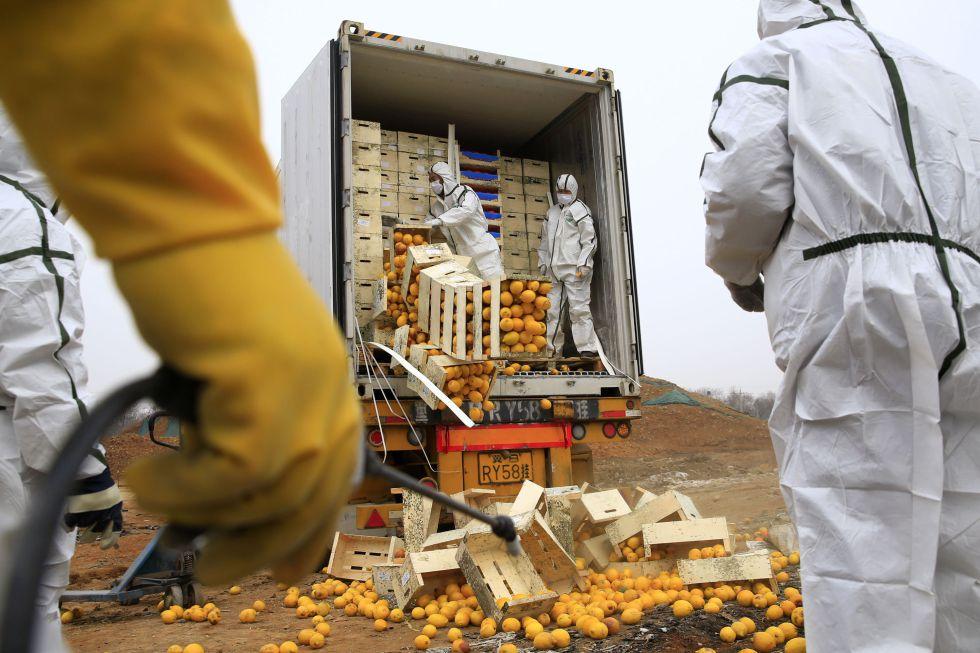 Los operarios descargan las naranjas españolas que fueron destruidas en China