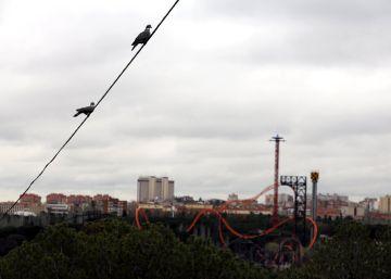 El fisco español y alemán revisan las cuentas de Parques Reunidos