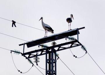 Guerra de planes y tarifas entre las compañías eléctricas ¿Cómo elegir?
