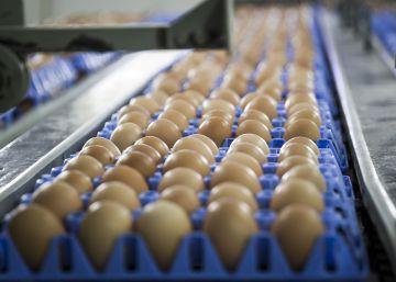 Estados Unidos vuelve a restringir las importaciones de huevos de la Unión Europea