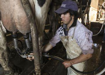 La crisis en Venezuela hunde a la segunda mayor lechera argentina