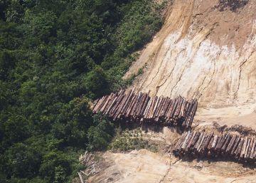 Los Estados pierden miles de millones cada año por delitos medioambientales
