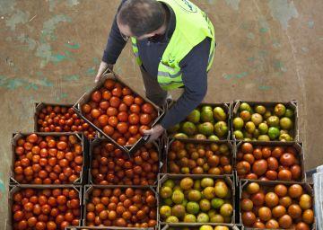 Marruecos y Holanda acorralan al tomate español