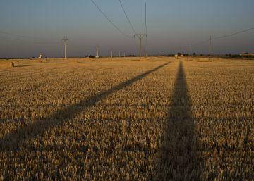 Una gran cosecha hunde los precios de los cereales esta campaña