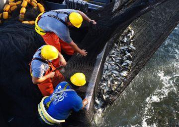 El mayor productor de salmón del mundo quiere criar pescado dentro de un barco