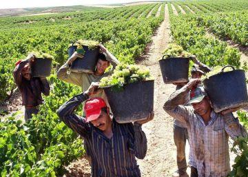 El vino registrará este año una cosecha récord