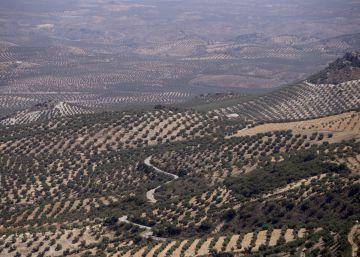 España busca aumentar sus exportaciones de aceite de oliva a EE UU