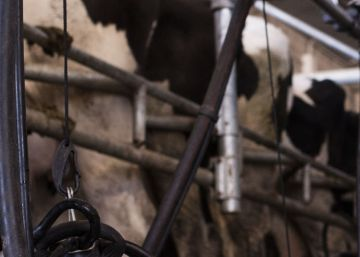 Argentina tira los precios de la leche