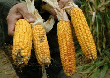 El nuevo orden en el sector agroquímico