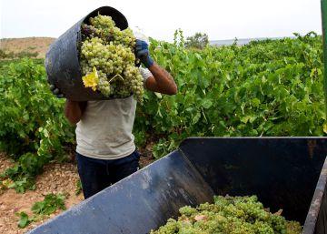 Las dos Españas del vino