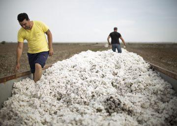 De los pisadores a la fibra egipcia: un sustento entre algodones españoles
