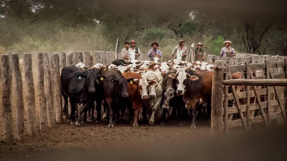 Estancia Los Pozos, una explotación de Cresud ubicada en la provincia argentina de Salta.
