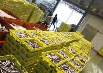 Registradas 26 lonjas de pescado por ventas al por mayor en negro