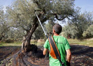 España desplaza a Italia en los principales mercados del aceite