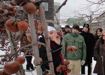 El néctar de las manzanas heladas
