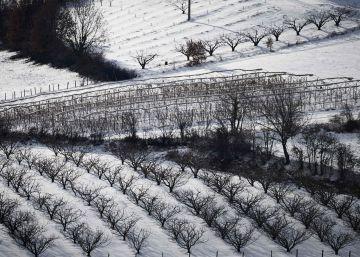 Las heladas arrasan los cultivos hortícolas en la UE y disparan los precios