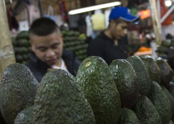 Is Mexico's avocado boom sustainable?