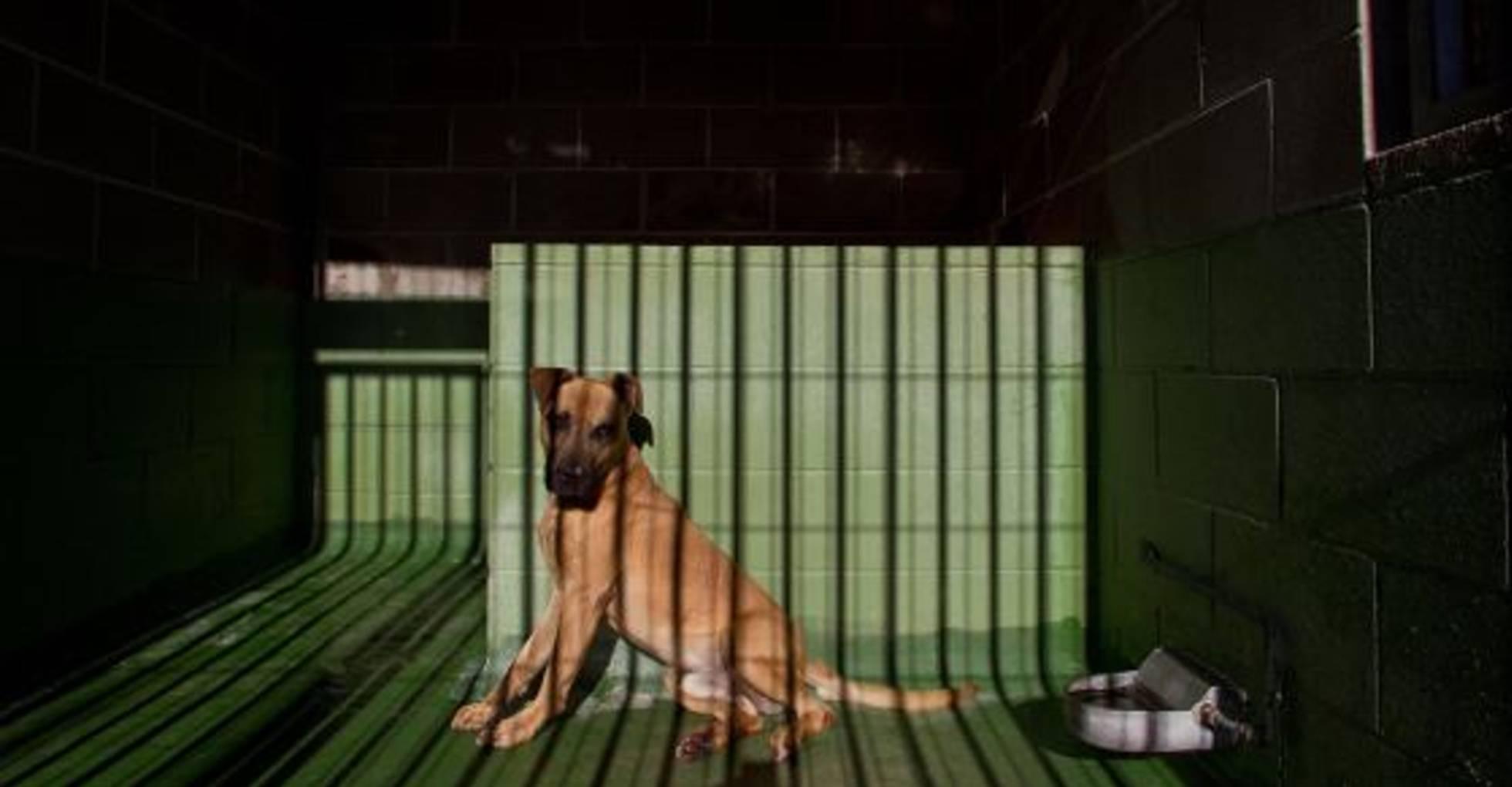 Los tribunales son cada vez más severos con los maltratadores de animales