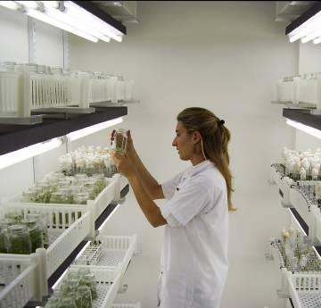 La tecnología está revolucionando los cultivos.