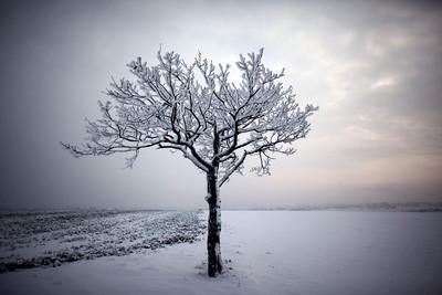FOTOGALERIA: Árbol