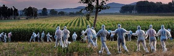 Acción ecologista contra cultivos presuntamente transgénicos en Torroella de Montgrí (Girona).