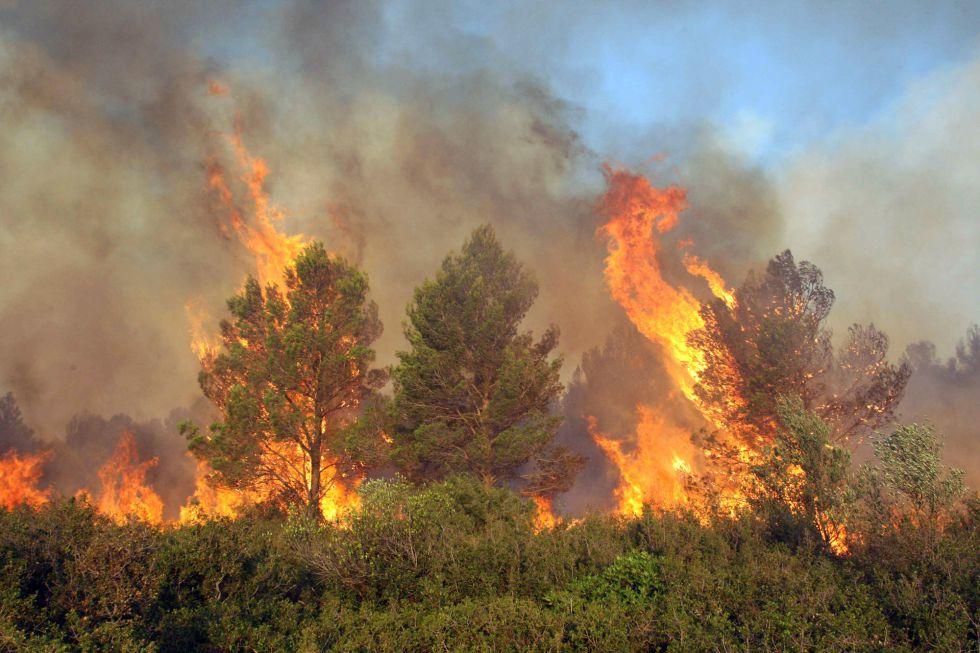 El incendio del Empordà continua activo en su frente sur. En la fotografia un bosque ardiendo cerca de Vilanant (Girona).