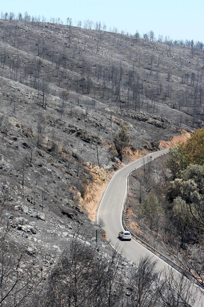 Un vehículo avanza por una carretera entre el monte quemado de Terradas.