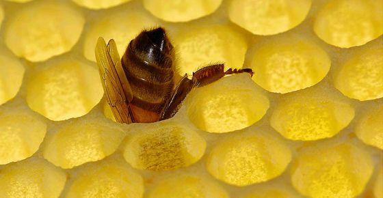 Esta abeja guarda un misterio