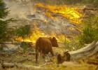 Estado de emergencia en San Francisco por un incendio en Yosemite