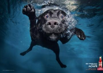 Enamorados, atletas, desesperados... y otros perros de anuncio