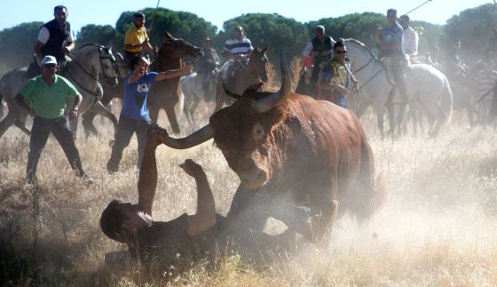 The photographer Pedro Armestre is knocked to the ground by the bull in Tordesillas.