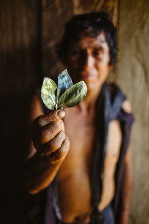 Un campesino enseña hojas de coca ya secas y preparadas para mascar.