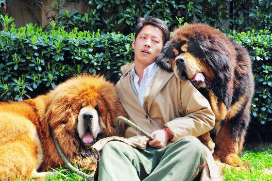 Los perros de dos millones que son la última moda en China